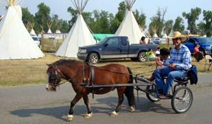 Miniature horse and cart, Crow Fair, Montana